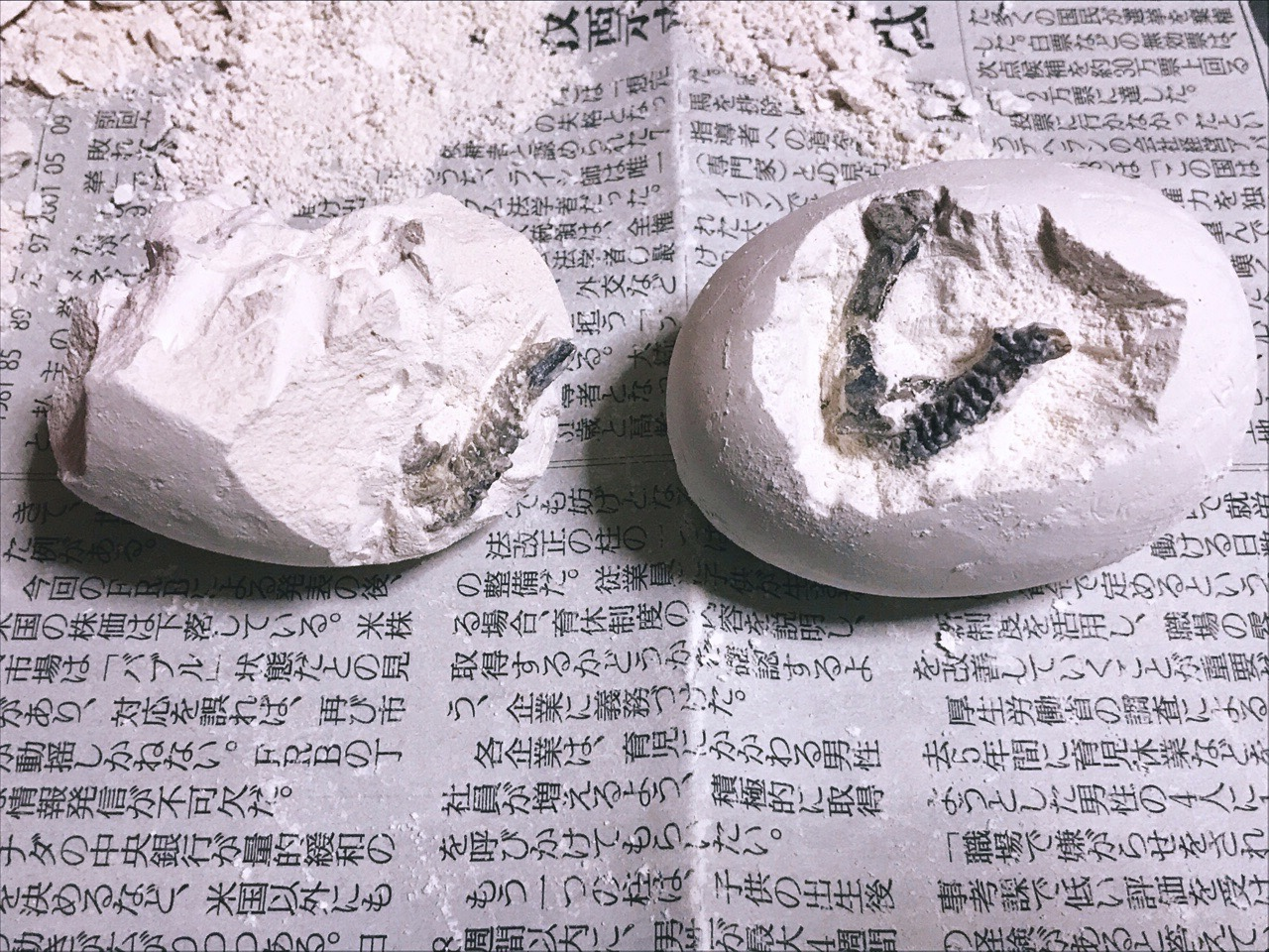 化石が少し見えてきた様子の画像